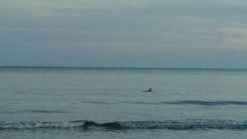Hilton Head Dolphins