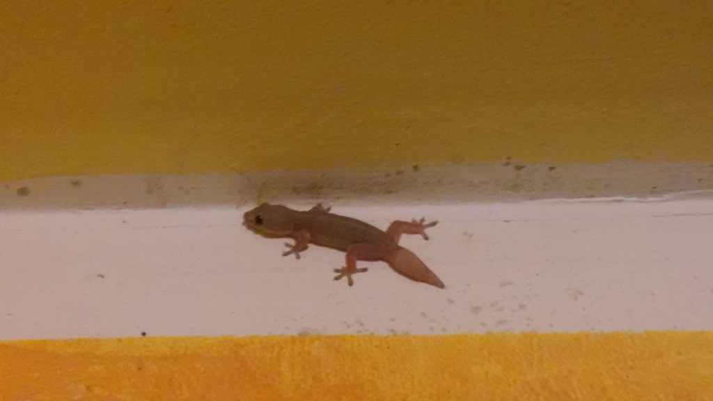 Newt in the Hotel
