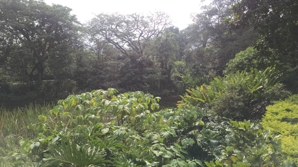 Medellín Botanical Garden