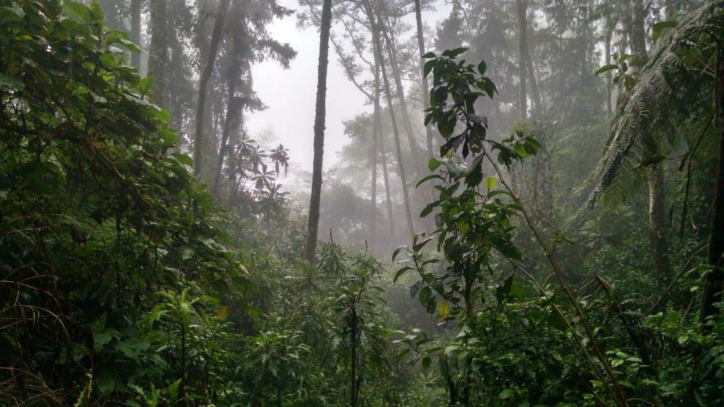 Cloud Forest, Salento