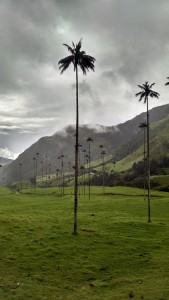 Cocora Valley - Salento, Colombia