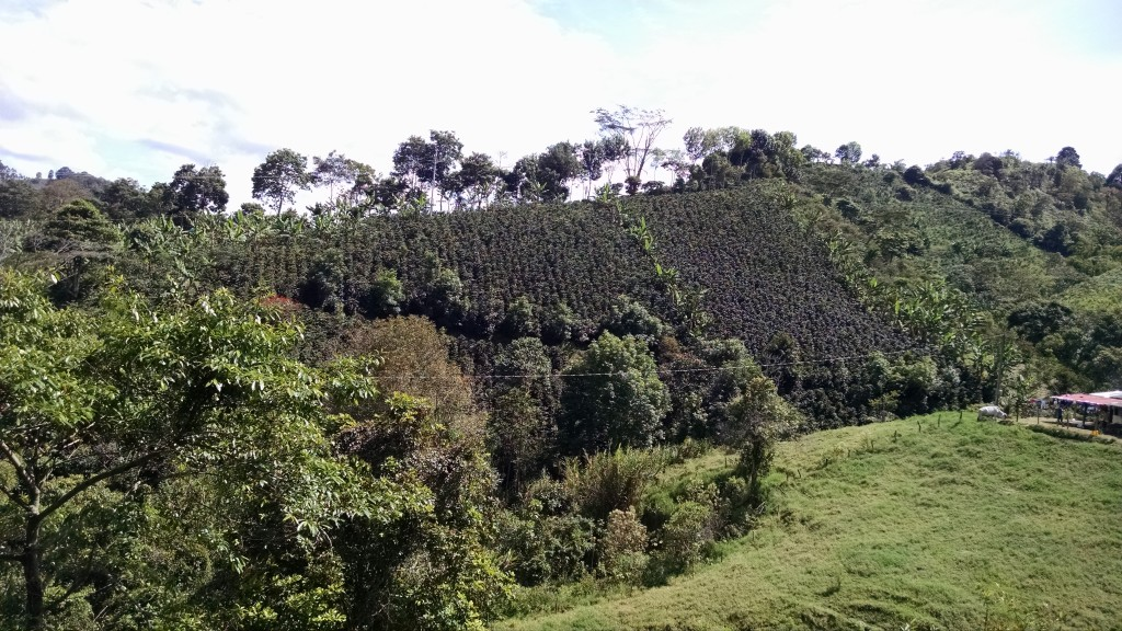 Coffee farm in Salento, Colombia
