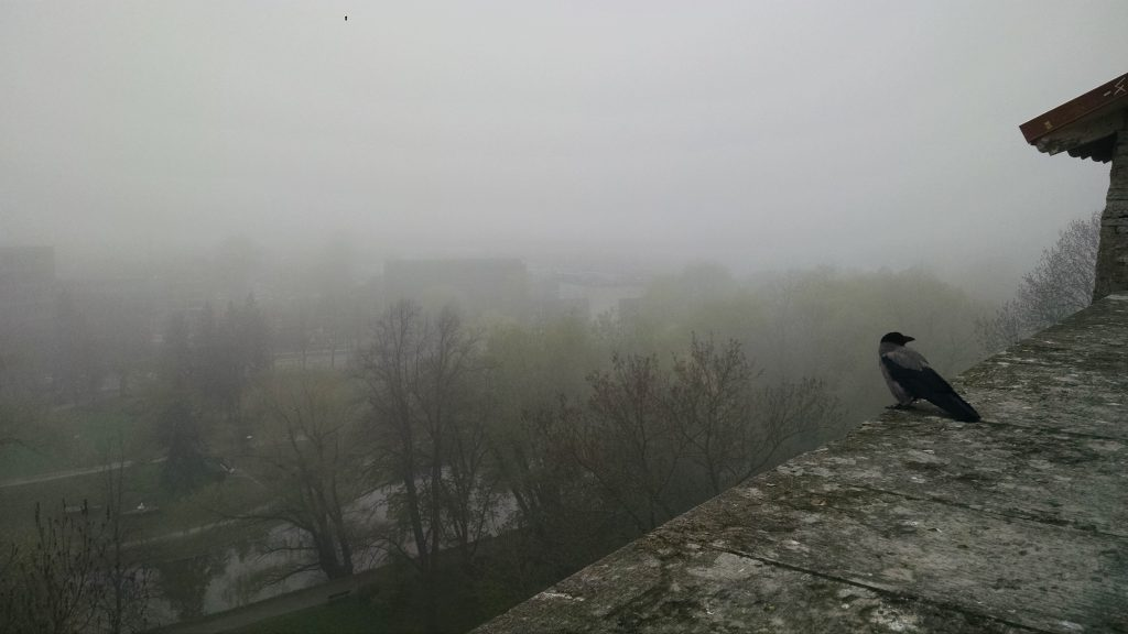 Foggy View of the Sea in Estonia