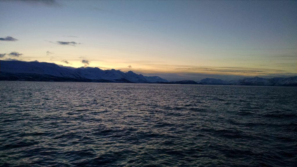 Whale watching Tromsø